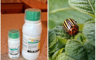 Means Aktar from the Colorado potato beetle
