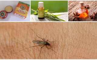 Overview of folk remedies for mosquitoes and midges in nature