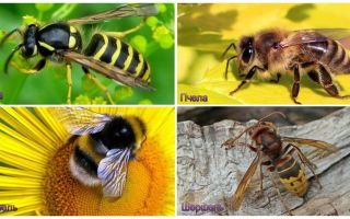What is the difference between wasp, bee, bumblebee, hornet