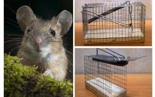 Mousetrap cage