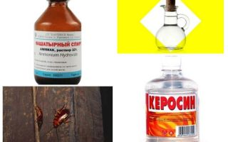 The most effective folk remedies for cockroaches