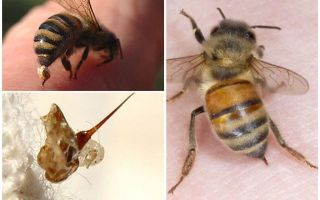 Bee sting and wasp