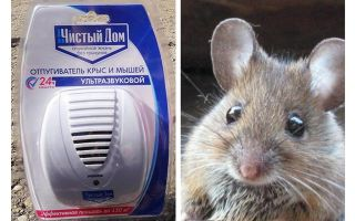 Ultrasonic repeller from rats and mice Clean house