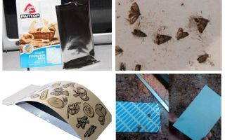 Food moth traps