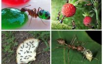 What ants eat in nature