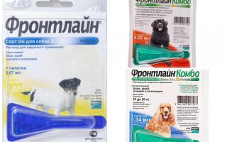 Drops frontline from fleas for dogs