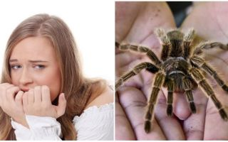 What is the name of the fear of spiders (phobia) and treatment methods