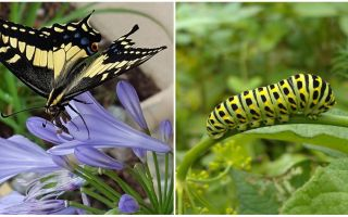 Turning a caterpillar into a butterfly