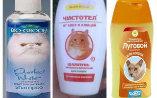 How often can I wash with flea shampoo