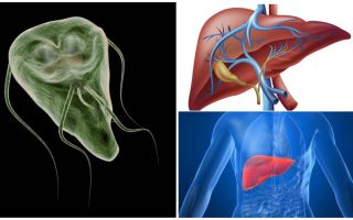 Giardia in the liver - symptoms and treatment