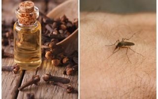 Clove oil against mosquitoes