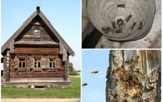 How to get the bees out of the wooden house and other places