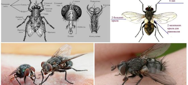 The structure of the fly