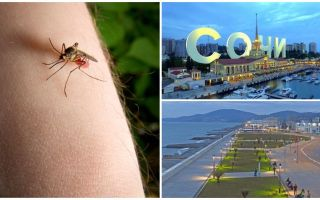 Are there mosquitoes in Sochi and Adler