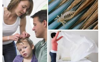 What are head lice afraid of?