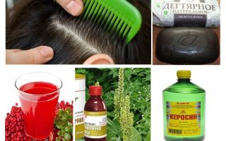 How to destroy lice and nits at home