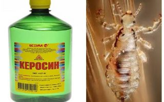 How to remove kerosene lice and nits