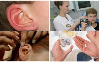 Tick in the ear of a person: symptoms and treatment