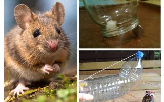 How to catch a mouse in a house without a mousetrap