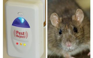 Pest Redzhekt ultrasonic repeller rodents and insects