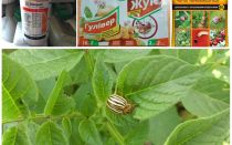 The most effective poisons and poisons from the Colorado potato beetle
