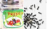Vinegar against ants in the garden