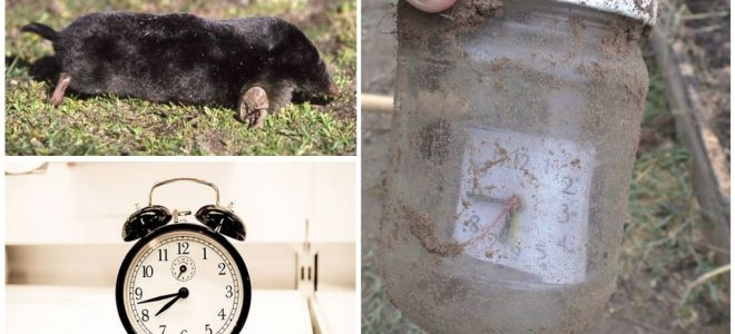 How to make do-it-yourself moles repellers from plastic bottles and other materials