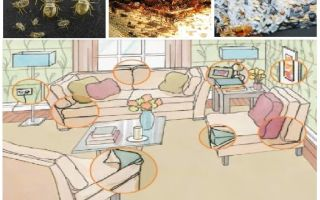 What and how to poison bugs at home