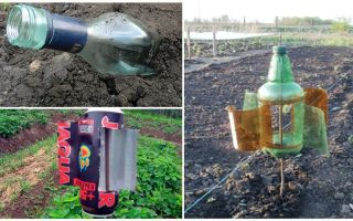 How to remove the mole from the dacha or garden