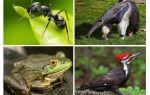 Who eats ants