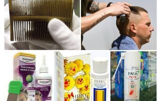 How and what to get head lice in children