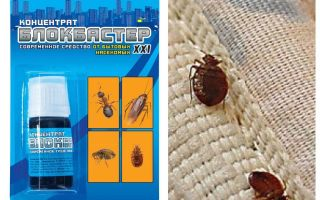 Means Blockbuster from bedbugs