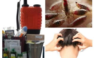 What is an anti-pediculosis kit?