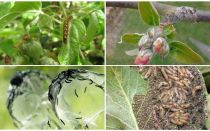 How to get rid of caterpillars on an apple tree