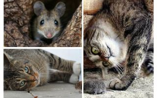 Do cats and cats eat mice?