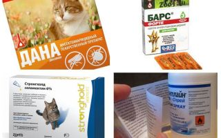 The best flea remedies for cats