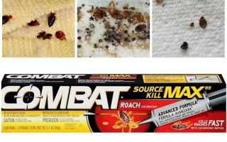 Means Kombat from bedbugs