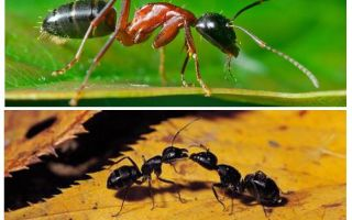 How much does an ant weigh