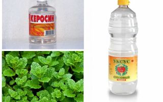 What fleas are afraid of: water, bleach, vinegar, kerosene, etc.