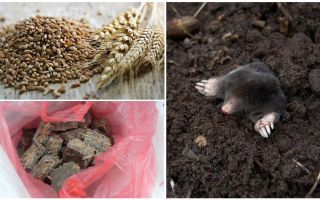 How and what to poison the moles