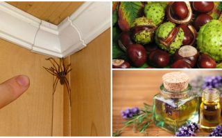 Methods and tools for spiders in an apartment or private house