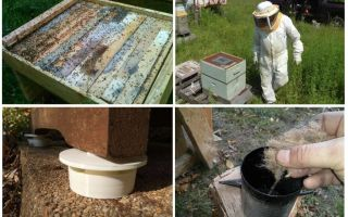 How to get rid of ants in the apiary folk remedies