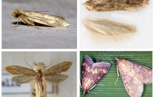 What helps from the moth and its larvae