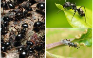Types of ants in Russia and the world