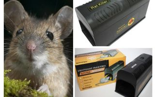 Electro mousetrap