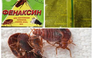 Powder Phenaxin from bedbugs