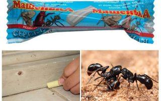 Pencil Masha from ants