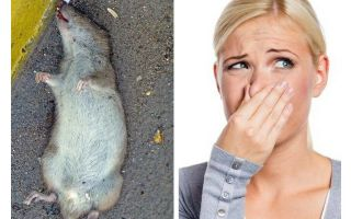 How to get rid of the smell of a dead rat under the floor