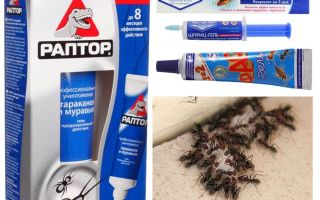 The best ant products