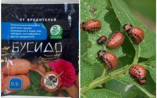 Remedy for Bushido Colorado potato beetle: instructions for use, effectiveness, reviews